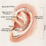 Earlobes in Otoplasty Dr Barry Eppley