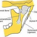 Stylomandibular Ligament in Jaw Angle Implants