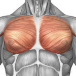Pectoral Muscle Implants