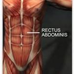 rectus abdominus fascia