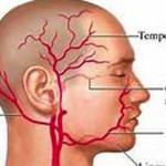 temporal artery anatomy