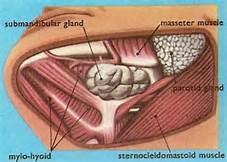 submandibular-gland-space